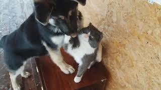 Кот и собака! Дружба собаки и кота!