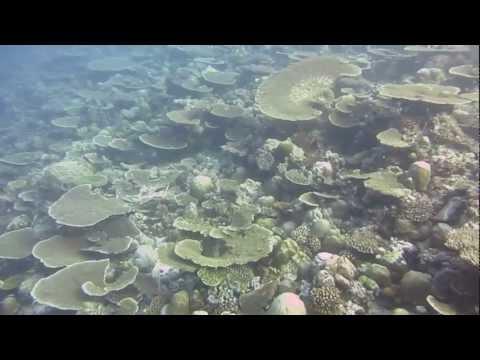 モルディブ サンゴ