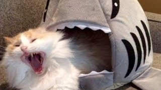 Download LAUGH SO HARD YOU'LL CRY - Funniest CAT VIDEOS compilation MP3 and video free