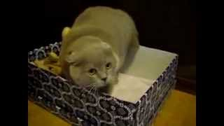 Говорящий кот, Да