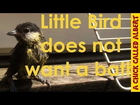 Little bird needs a bath