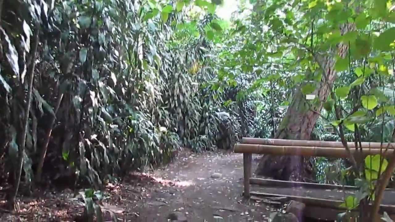 Jardin botanico la laguna reportaje youtube for Jardin de la vereda