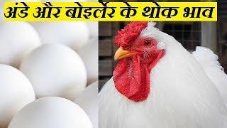 छुटे हुए पोल्ट्री रेट और अंडे का थोक भाव एक साथ | egg rate updatesfor layer farmers