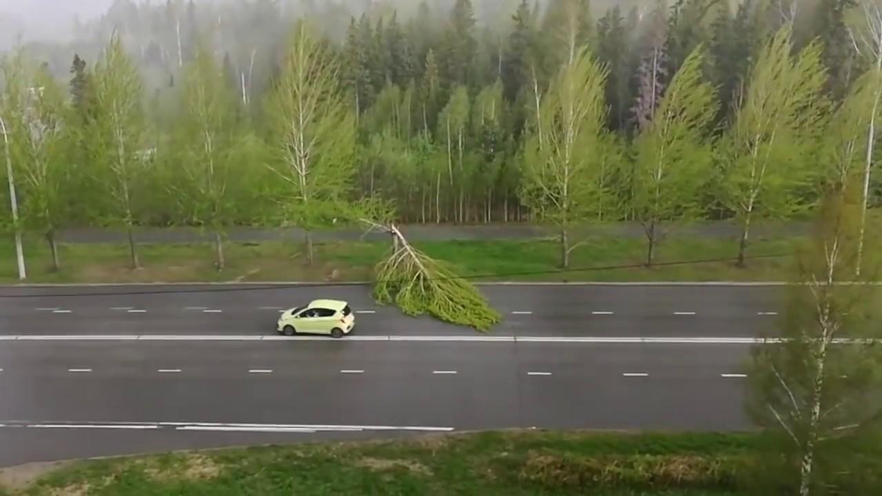 Дерево - автостоп