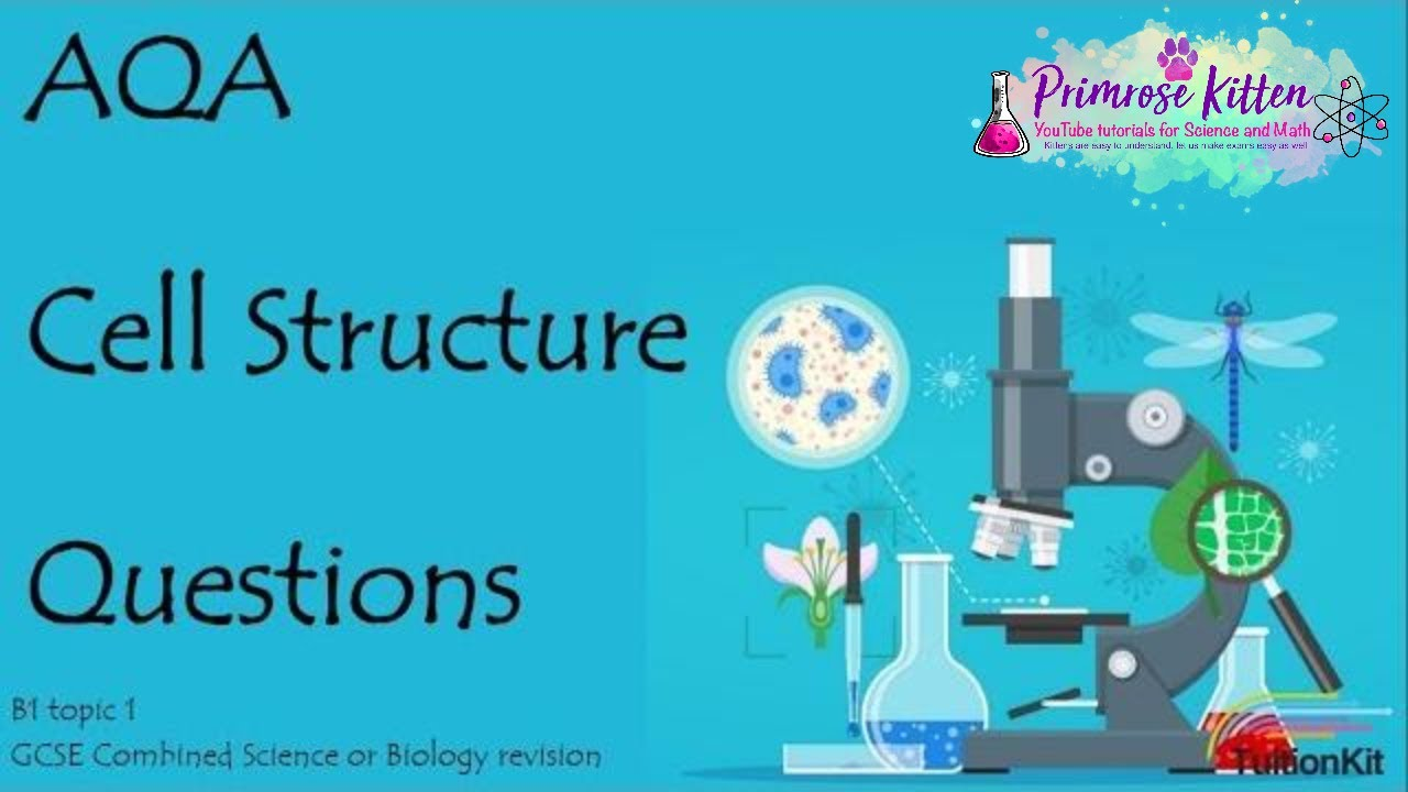 Cell Structure Aqa B1 Topic 1 Quick Fire Questions 9 Gcse Mcat Course Image Archive Prokaryotic Vs Eukaryotic Biology Or Combined Science Revision