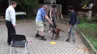 Dog Training | How To Wean A Puppy From Running Up To Strangers