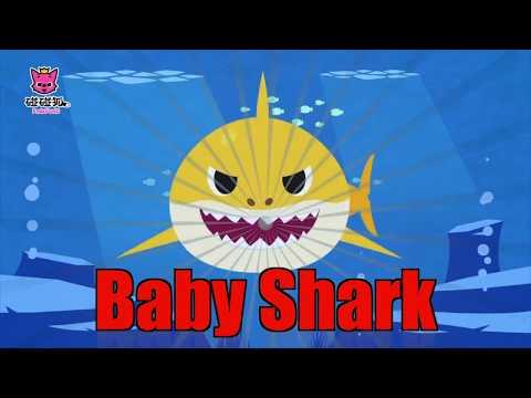 เบบี้ชาร์ค Baby Shark Chinese Version