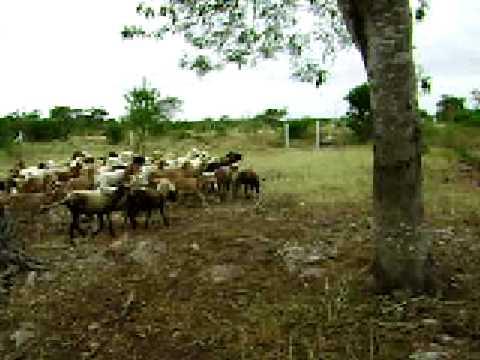 El rancho del primo 2