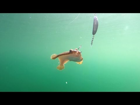 Fishing for Flatfish in Puget Sound