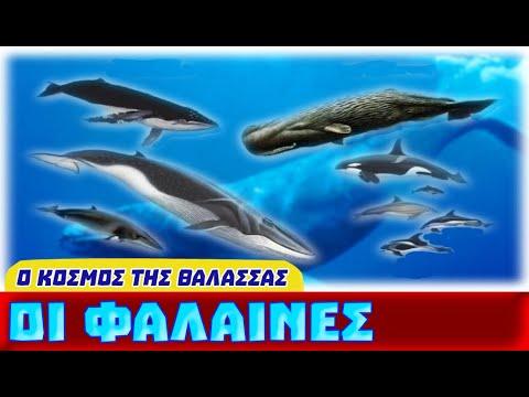 Τα Πιο Αγαπητά Ζώα της Θάλασσας - Οι Φάλαινες (aquatic placental marine mammals)