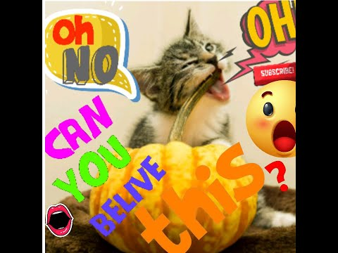 #CatReaction#FunnyCat Catbaby Cats ✪ Cute and funny Cats Videos Compilation to Keep You Smiling