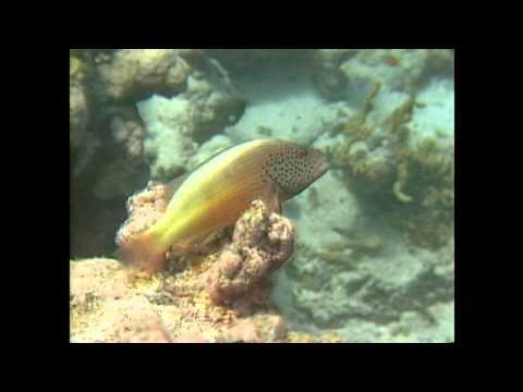 メモリ--海底世界(ポール・モーリア)Paul Mauriat --Memory