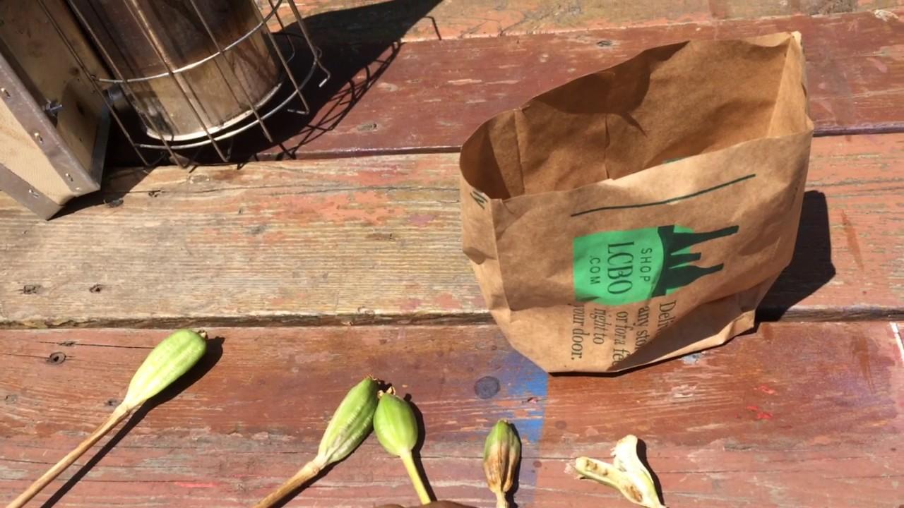 Propagating Tulip Seeds Youtube
