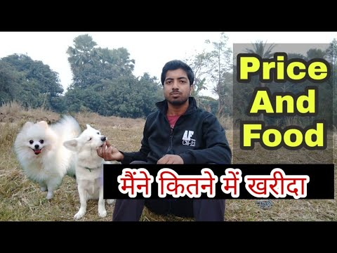 Price of my dog in india ? // सवाल और जवाब