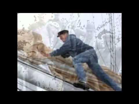 Shoals Of Herring By Shanneyganock