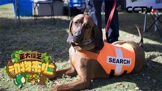 [正大综艺·动物来啦]选择题 以下哪个颜色能够更加吸引搜救犬注意?| CCTV