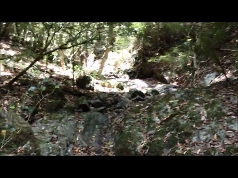 Alluvial Gold Prospecting - How to Get Gold from a Crevice - Crevicing for Rainforest Gold
