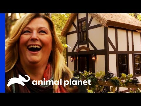 Step by Step: Shakespeare's Globe Theatre In The Trees! | Treehouse Masters