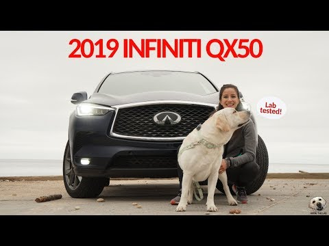 2019 Infiniti QX50: Andie the Lab Review! #Infiniti #LabTESTED #AndietheLab