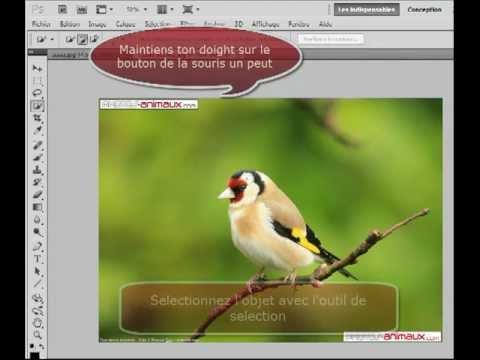 Tutoriel Changer L Arriere Plan D Un Objet Avec Photoshop Cs5 Youtube