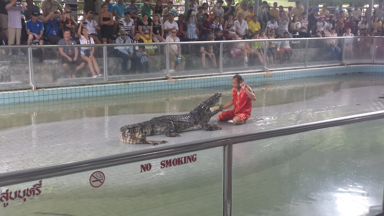 Incredible CROCODILE SHOW at Pattaya Crocodile Farm ...