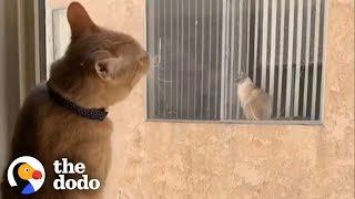 Cats Fall In Love After Seeing Each Other Through a Window Every Day | The Dodo