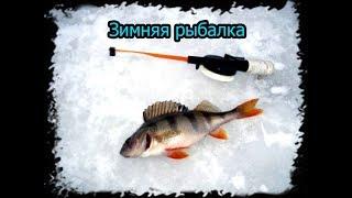 Зимняя рыбалка на Новосибирском водохранилище. ( Обское море )