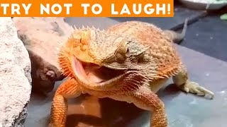 animals funny