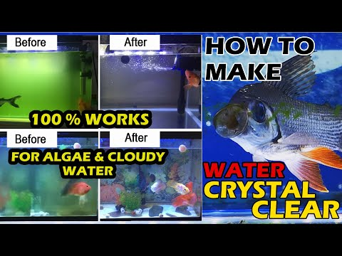 HOW TO MAKE AQUARIUM WATER CRYSTAL CLEAR   How To Remove Cloudy Water   How To Remove Algae