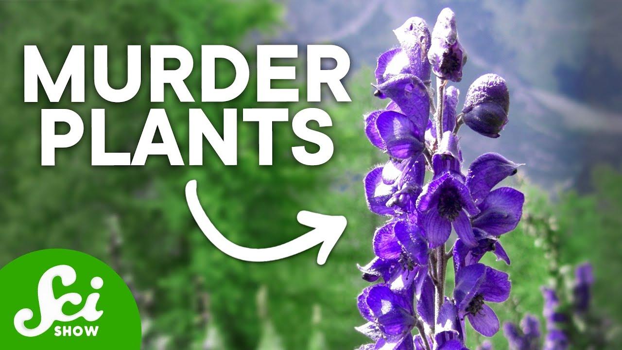 Plants Kills All