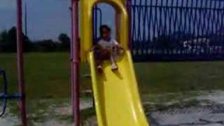 Miniature Schnauzer Sliding