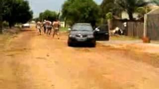 cachorro pit bull ataca cachorro vira lata em sinop mt