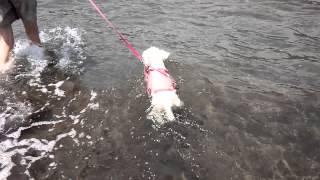泳ぐのが大好きなククナ、波乗りだって出来ちゃいます!