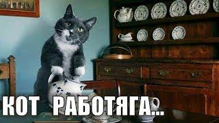 Кот работает - Кот работяга | Как заставить кота работать?