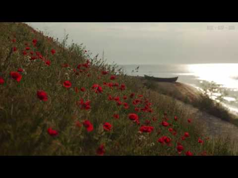 Relaxing Sounds at Seashore with Calm Waves and Light Wind Blowing Through the Red Poppies - 4K