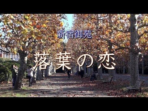 新宿御苑の秋-落葉の恋