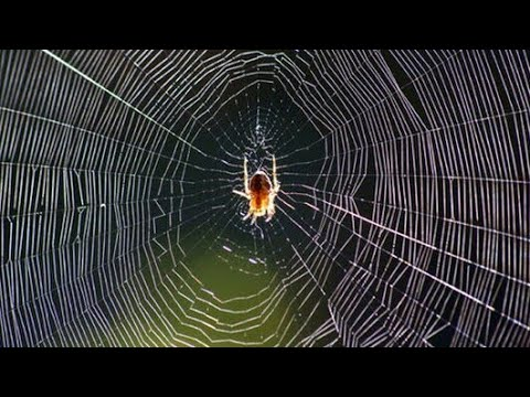You can't believe how spiders make their webs