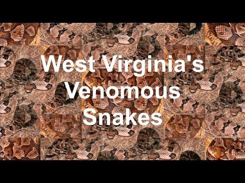West Virginia's Venomous Snakes
