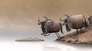 Любопытный круговорот жизни зверей