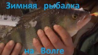 Судак на 7.5 кг Стрелка Нижний Новгород