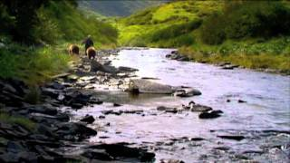 Grizzly Man Ending
