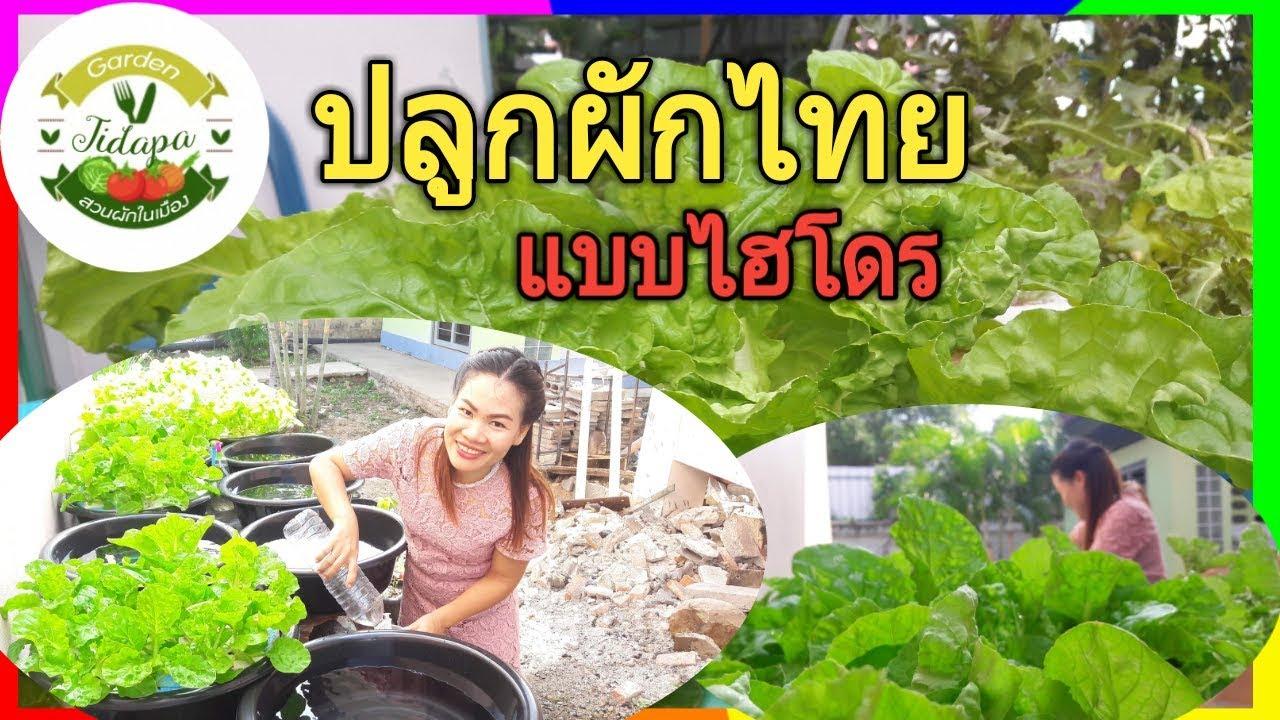 วิธีเพาะเมล็ดผักไฮโดรโปนิกส์ : สอนวิธีเพาะเมล็ดผักไฮโดรโปนิกส์แบบง่าย, grow vegetable at home. ep.33