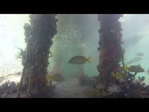 Underwater Fish of Panama