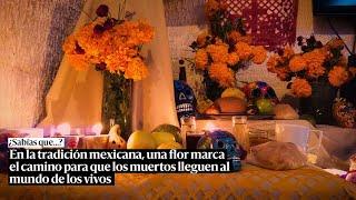En la tradición mexicana una flor marca el camino para que los muertos lleguen al mundo de los vivos