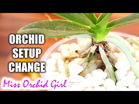 I'm changing my Orchid setup - here's why
