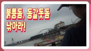 낚시하기 좋은날! 붉퉁동, 동갈돗돔 낚아라!! 예고