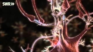Total Phänomenal Netzwerk Nerven (Nervenzellen)