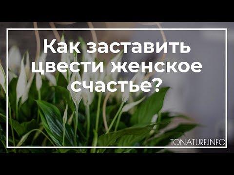 Как заставить цвести женское счастье? | toNature.Info