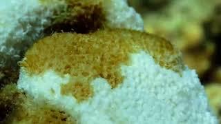 La crème solaire a-t-elle un impact sur les récifs coralliens ?