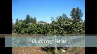 Maan Farms U-Pick - Strawberries, Blueberries, Raspberries